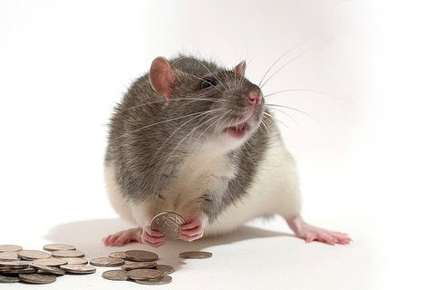 mouse-money.jpg